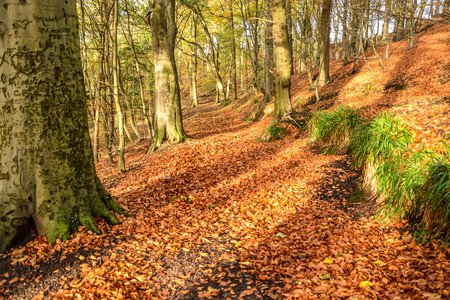 Background picture of Autumn forest ground covered with colorful autumn leaves, sunlight and trees shadow