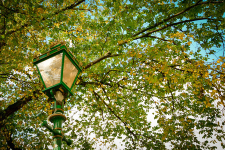 A beautiful vintage green lamppost isolated under autumn tree branches and leaves and clear blue sky