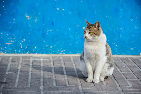 Isolated Furred Cat sit in front of Vintage blue wallpaper wall background