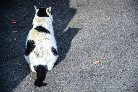 Black and White furry Cats back and shadow on street