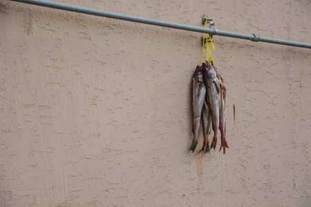 Dried fishes hanging on the wall. Local Food preparation.