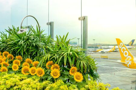 Beautiful Sunflowers sky garden, Changi International Airport, Singapore, October 2018