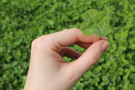 Four leaf clover Stock Photo - 11218679