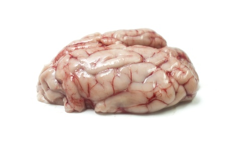 Isolated pig brains Stock Photo