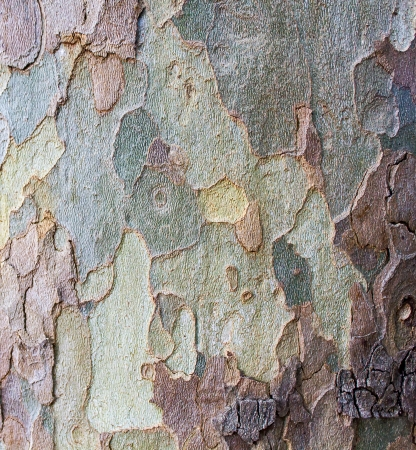 Bark texture tree trunk photo
