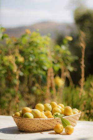 epicurean: Basket of yellow plums