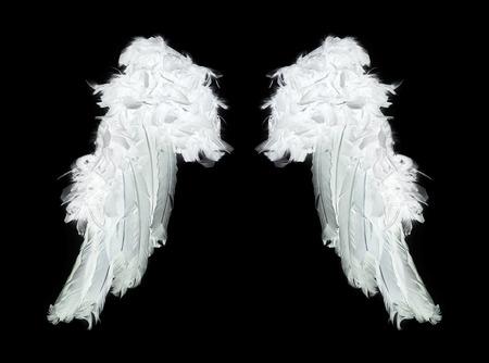 cisnes: Alas de ángel blancas sobre fondo negro Foto de archivo