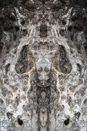 Symmetric tree bark texture Archivio Fotografico