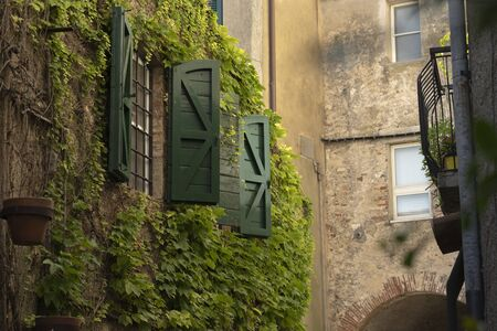 Green windows with climbing plants in the village Capalbio - Italy Stock Photo