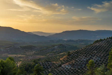 Landscape of olive trees and mountains at sunset near Segura de la Sierra in the province of Jaen - Spain