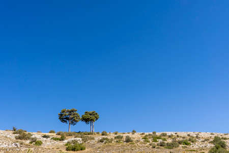 Couple of trees in a dry landscape on clear blue sky