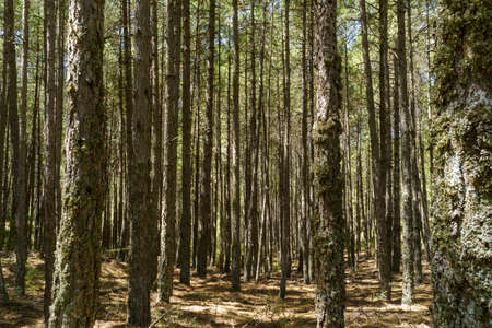 Tree trunks in a forest in natural park of