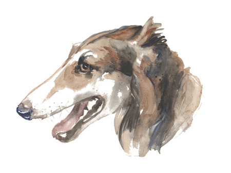 The russian greyhound - isolated hand-painted watercolor hunter dog