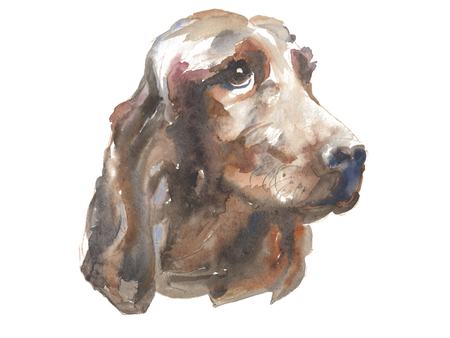 The irish setter - isolated hand-painted watercolor hunter dog Stock Photo