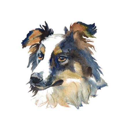 De border collie - geïsoleerde handgeschilderde aquarel herdershond
