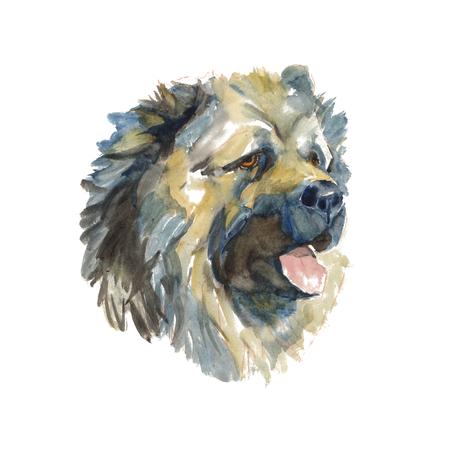 The caucasian shepherd dog - isolated hand-painted watercolor shepherd dog Stock Photo