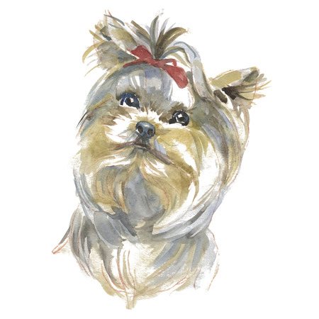 The yhorkshire terrier - hand-painted watercolor dog portraits Reklamní fotografie - 92700325