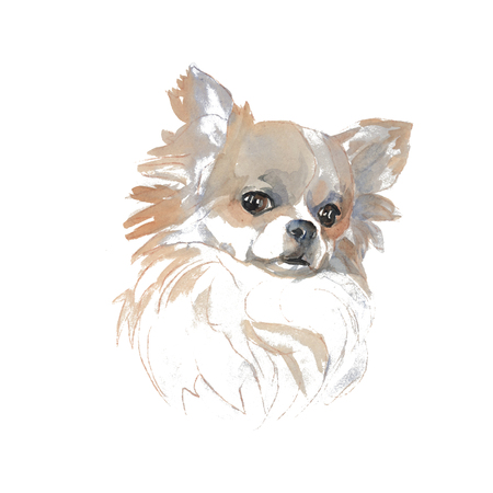 The chihuahua - hand-painted watercolor dog portraits 스톡 콘텐츠