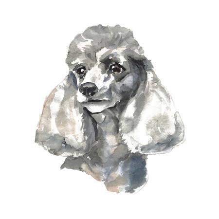De poedel - met de hand geschilderde aquarelhondportretten