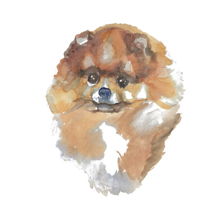 The spitz - hand-painted watercolor dog portraits
