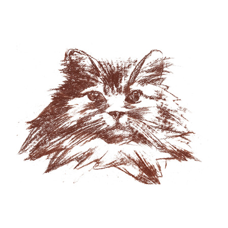 The Persian cat - isolated hand-painted sanguine cat portret