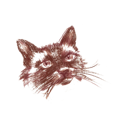 The siamese cat - isolated hand-painted sanguine cat portret