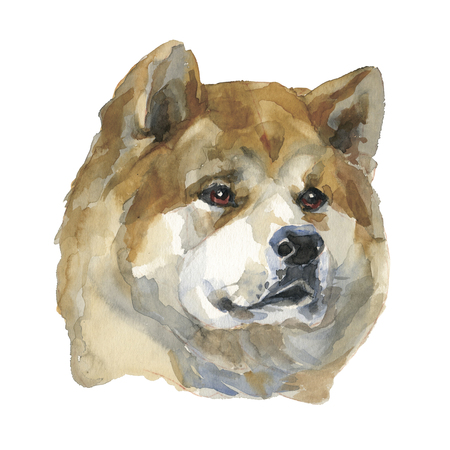 The akita inu. Watercolor hand painted illustration, graphic portrait dog. Watercolor isolated on a white background. Hand painted in realistic style.
