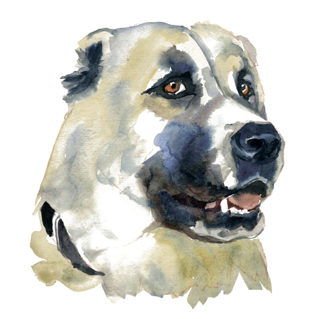 The Central asian shepherd dog. Watercolor hand painted illustration, graphic portrait dog. Watercolor isolated on a white background. Hand painted in realistic style. Stock Photo