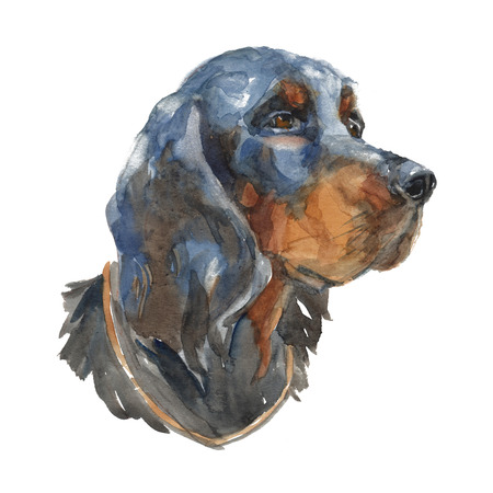 The Gordon Setter. Watercolor hand painted illustration, graphic portrait dog. Watercolor isolated on a white background. Hand painted in realistic style.