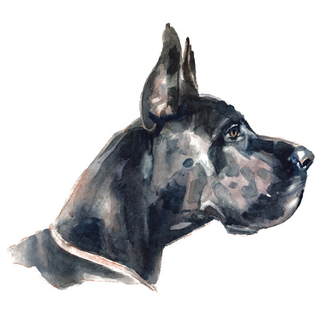 The great dane. Watercolor hand painted illustration, graphic portrait dog. Watercolor isolated on a white background. Hand painted in realistic style. Archivio Fotografico