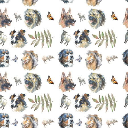 pattern - shepherds dogs, border collie, long-haired collie and german shepherd 写真素材