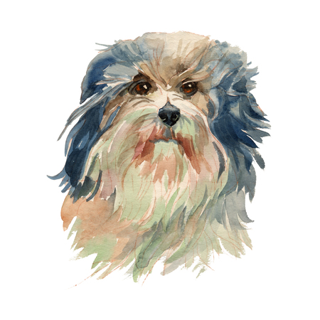Lowchen, Little Lion Dog  - hand painted, isolated on white background watercolor dog portrait