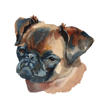 Petit brabancon - hand painted, isolated on white background watercolor dog portrait