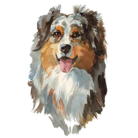 Australian shepherd - hand painted, isolated on white background watercolor dog portrait Archivio Fotografico