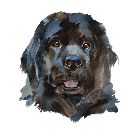 Chien Terre-Neuve - peint à la main, isolé sur fond blanc portrait de chien aquarelle Banque d'images - 99111047