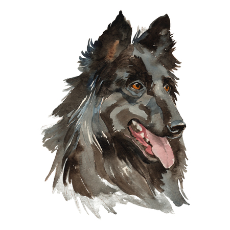 Groenendael dog - hand painted, isolated on white background watercolor dog portrait