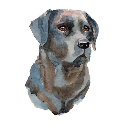 Labrador retriever - hand painted, isolated on white background watercolor dog portrait
