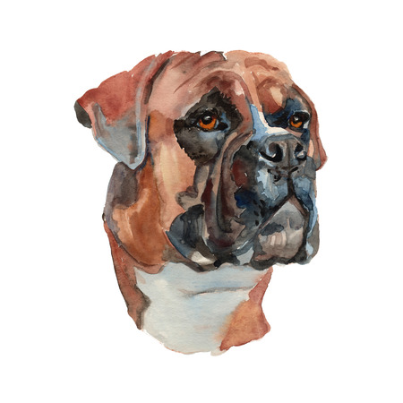 German boxer dog - hand painted, isolated on white background watercolor dog portrait