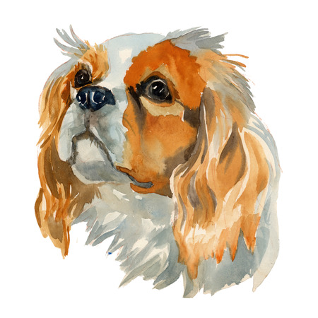 Cavalier king charles spaniel - hand painted, isolated on white background watercolor dog portrait
