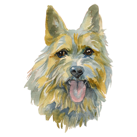 The Norwich Terrier is a breed of dog originating in the United Kingdom, and was bred to hunt small vermin or rodents. Hand painted, isolated on white background watercolor dog portrait