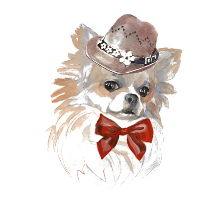 The Chihuahua dog  - hand painted, isolated on white background watercolor fashion cute dogs portrait 写真素材