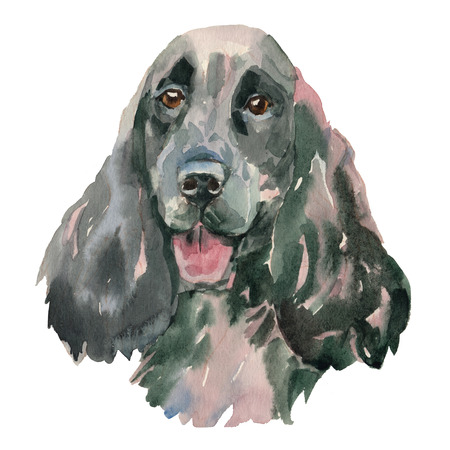 The English Springer Spaniel - hand painted, isolated on white background watercolor