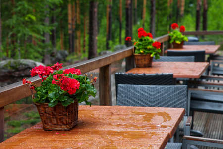 aspidistra: A nook of a forest cafe