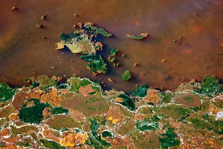 Abstract pattern d'algues dans l'eau sale