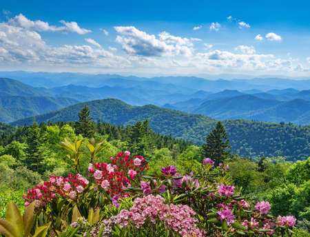 Beautiful flowers blooming in the mountains.