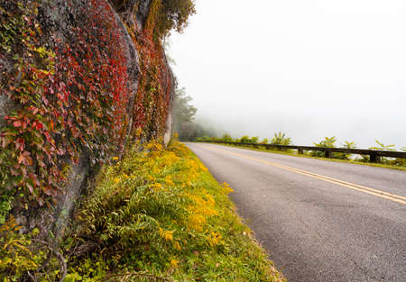 Blue Ridge Parkway on foggy autumn morning.Colorful autumn leaves growing on the rock. Road winding through colorful mountains. Near Asheville, North Carolina, USA.