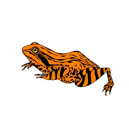 Frog in profile black yellow illustration Ilustração Vetorial