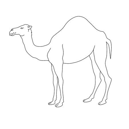 camel silhouette: camel silhouette black white illustration Illustration