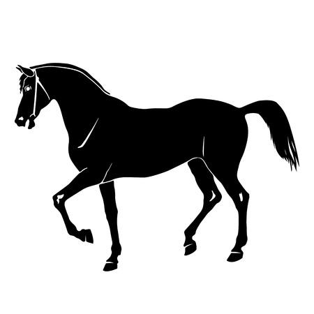 bridle: Black horse silhouette Stock Photo