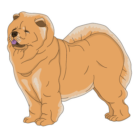 chow: dog chow chow red in illustration isolated